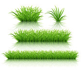 istock Set of different bushes of green grass on a white reflective surface. Highly realistic illustration. 1214413954