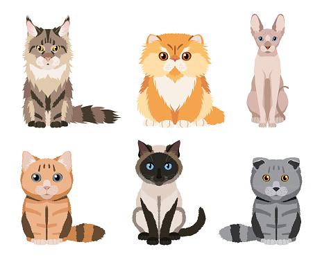 Set of different cat breeds: maine coon, persian cat, siamese cat, british shorthair cat, scottish fold, sphynx hairless cat
