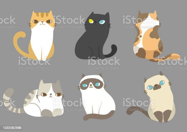 Set of different cats breeds in different poses on grey background vector id1032062566?b=1&k=6&m=1032062566&s=612x612&h=tlpnnthtusugue6jex3b qz99u e l8y1crcozkqnkm=