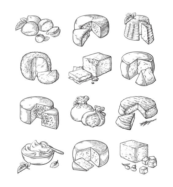 set of different cheese set of different cheese Vector illustration collection mozzarella stock illustrations