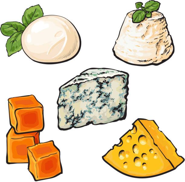 Set of different cheeses mozarella, cheddar, Roquefort, camembert maasdam Set of different cheeses mozarella, cheddar, Roquefort, camembert and maasdam isolated sketch style vector illustration on white background. Various sorts of delicious hard and soft cheese mozzarella stock illustrations