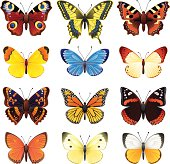 A set of different colored butterflies