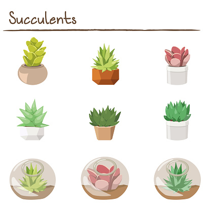 Set of Different Colorful Succulents in Pots and Glass Terrariums