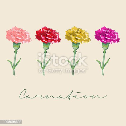 Set of Different coloured Dianthus caryophyllus, Clove Flower, Carnation Botanical Colourful vector illustrations