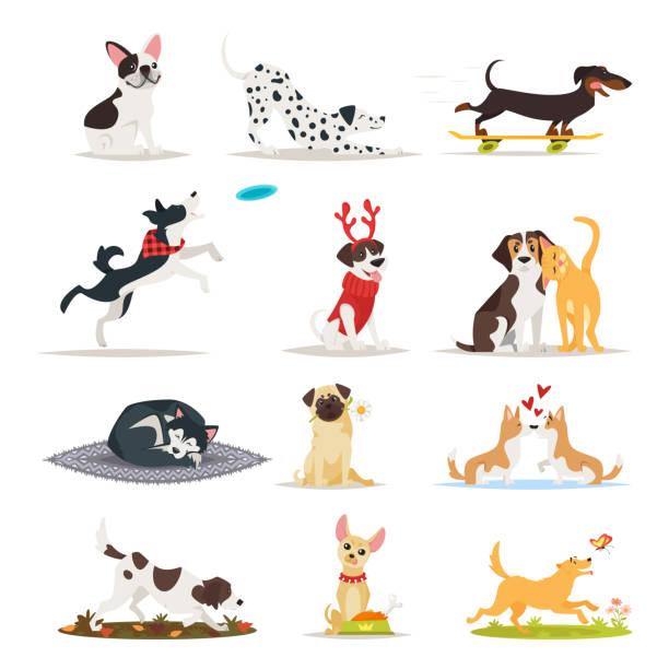reihe von verschiedenen hunderassen - schoßhunde stock-grafiken, -clipart, -cartoons und -symbole