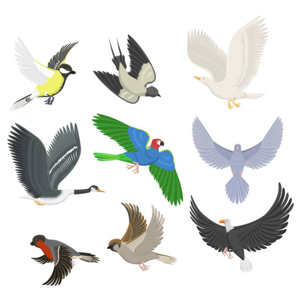 Best Sparrow Flying Illustrations, Royalty-Free Vector ... - photo#8