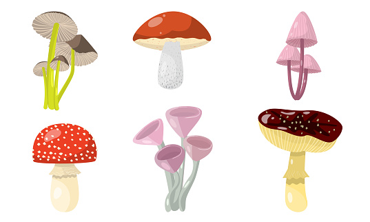 Set of different forest mushrooms and toadstools. Vector illustration in flat cartoon style