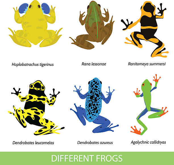 stockillustraties, clipart, cartoons en iconen met set of different frogs, flat design. - wildplassen