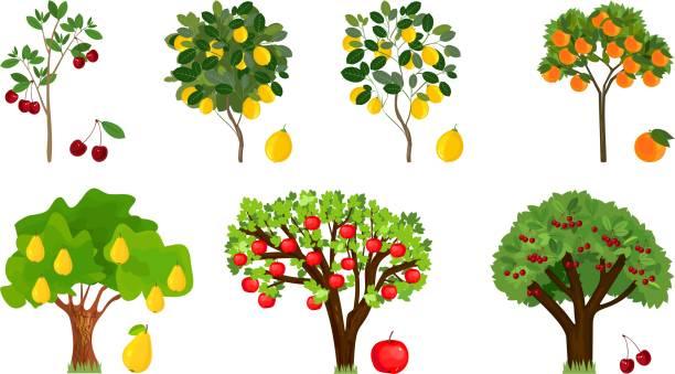 stockillustraties, clipart, cartoons en iconen met set van verschillende fruitbomen met rijpe vruchten op witte achtergrond - fruitboom