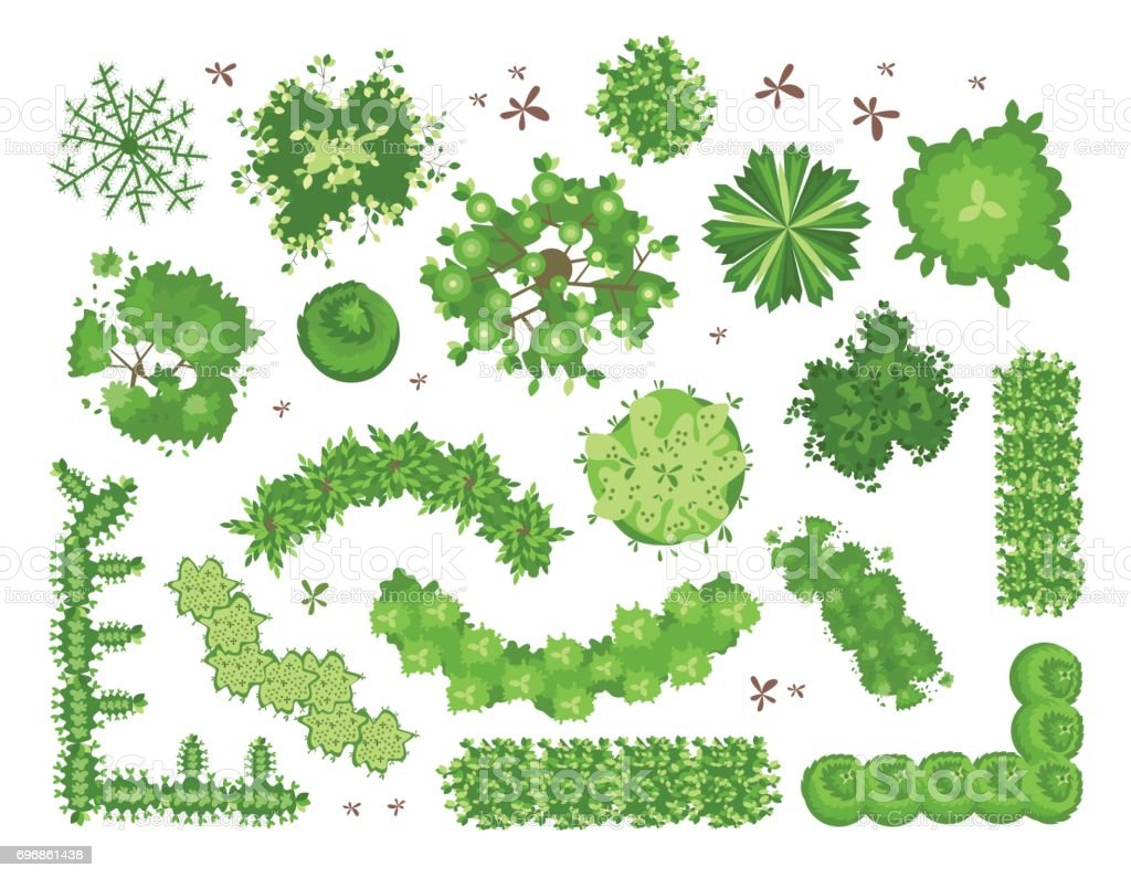 Set of different green trees, shrubs, hedges. Top view for landscape design projects. Vector illustration, isolated on white. vector art illustration