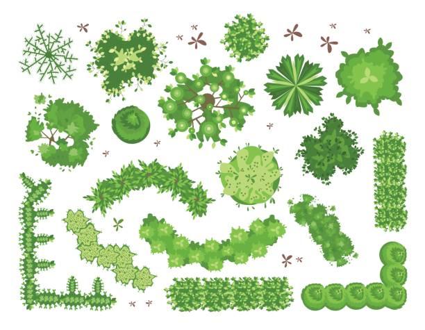 ilustraciones, imágenes clip art, dibujos animados e iconos de stock de conjunto de diversos árboles verdes, arbustos, setos. vista superior para proyectos de diseño de paisaje. ilustración vectorial, aislado sobre fondo blanco. - overhead
