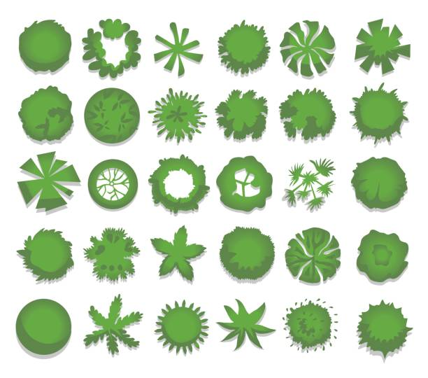 Set of different green trees, shrubs, hedges. Top view for landscape design projects. Vector illustration, isolated on white. Set of different green trees, shrubs, hedges. Top view for landscape design projects. Vector illustration, isolated on white background. aerial view stock illustrations