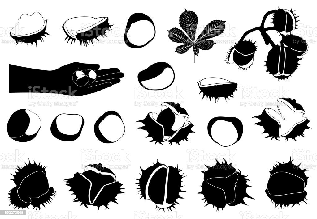 Set of different horse chestnuts vector art illustration