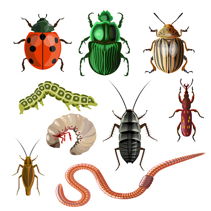 Set of different insects and worms.