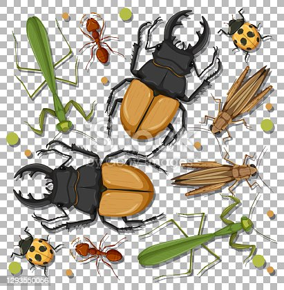 istock Set of different insects on transparent background 1293550056