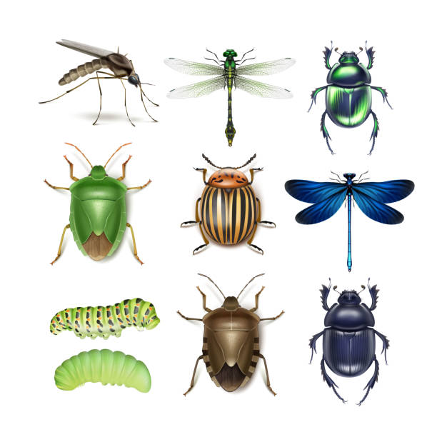Set of different insects Vector set of different insects gnat, dragonflies, colorado potato beetle, scarabs, green and brown stink bugs, caterpillars top view isolated on white background beetle stock illustrations