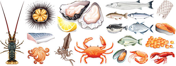 set of different kinds of seafood - 魚介類点のイラスト素材/クリップアート素材/マンガ素材/アイコン素材