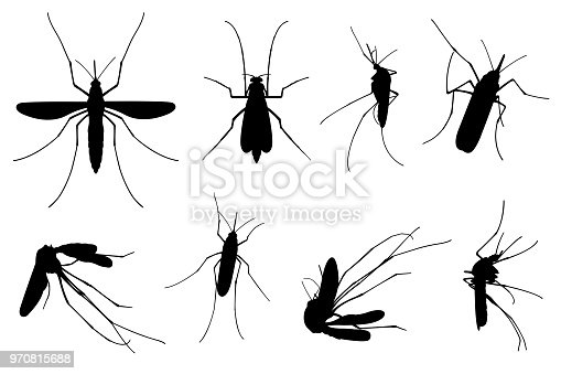 Set of different mosquitoes isolated on white