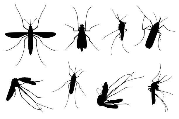 다른 모기의 세트 - 곤충 실루엣 stock illustrations