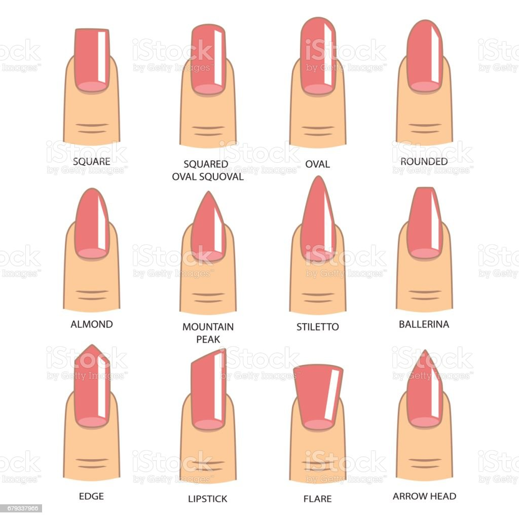 Set of different shapes of nails on white. Nail shape icons. Manicure polish. Vector illustration vector art illustration