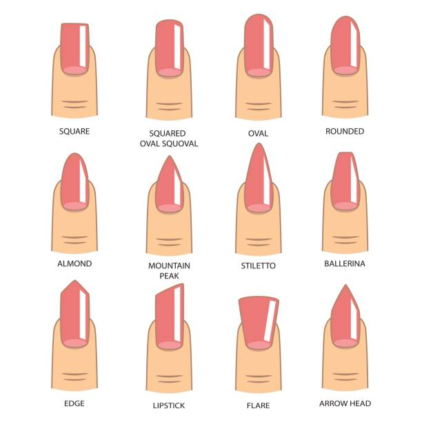 Set of different shapes of nails on white. Nail shape icons. Manicure polish. Vector illustration Set of different shapes of nails on white. Nail shape icons. Manicure polish. Vector illustration white nail polish stock illustrations