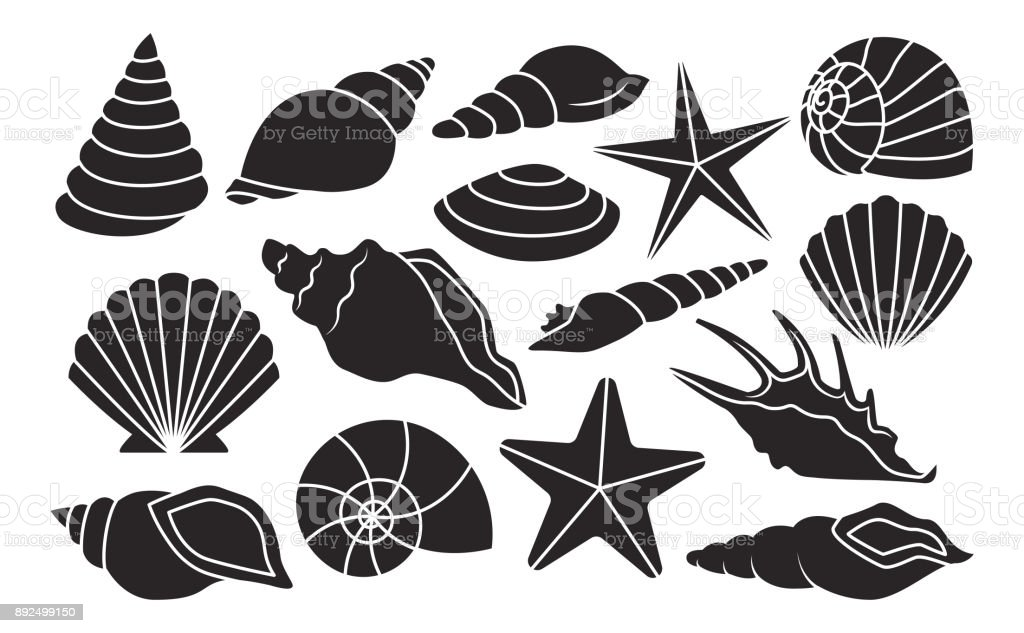 Set Of Different Shells Isolated On White Background vector art illustration