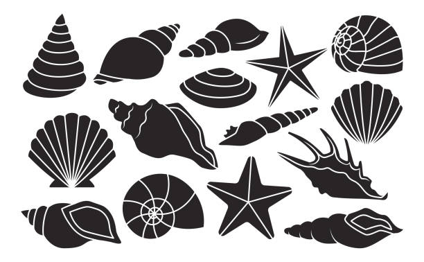 set of different shells isolated on white background - seashell stock illustrations, clip art, cartoons, & icons