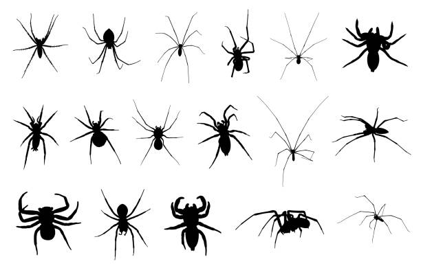 set of different spiders - tarantula stock illustrations