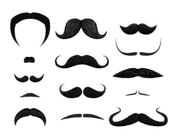 ilustrações, clipart, desenhos animados e ícones de conjunto de diferentes estilos de bigode isolado no fundo branco. - bigode