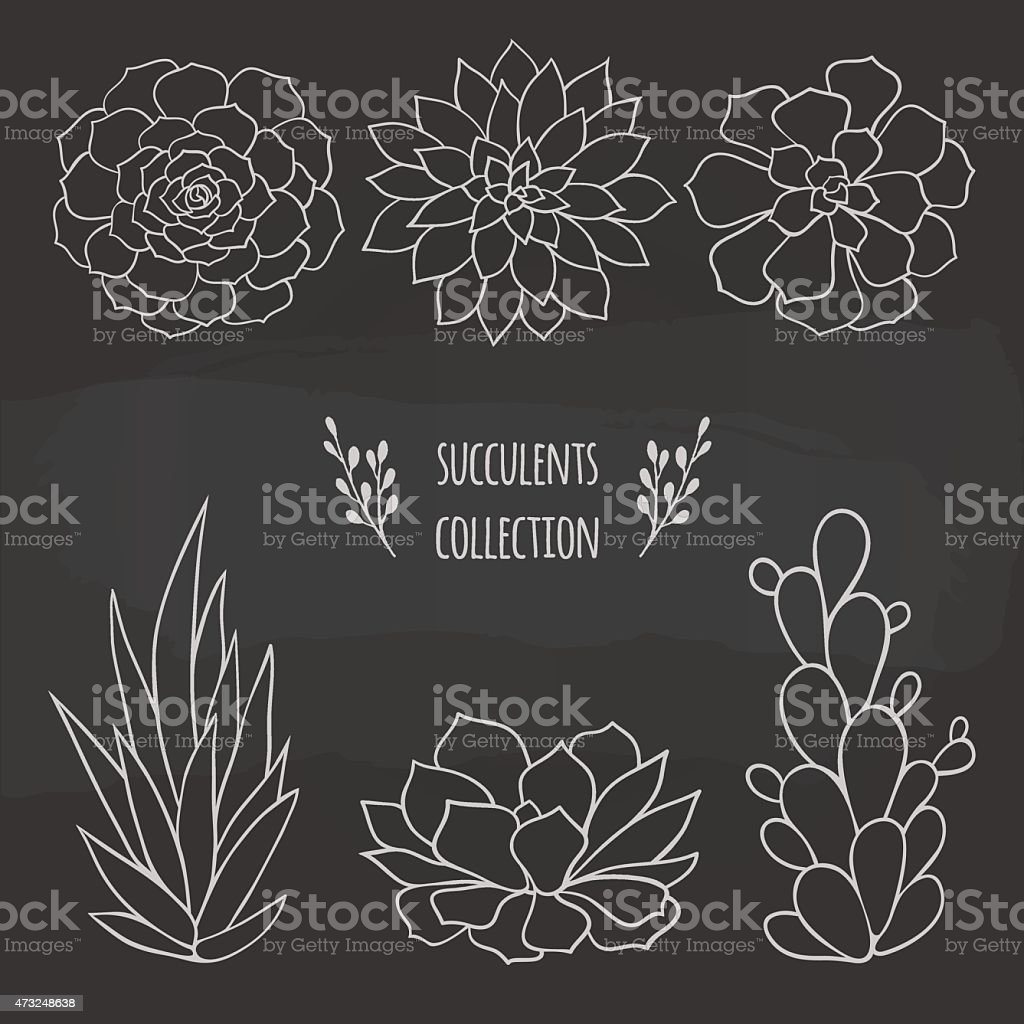set of different succulents vector art illustration