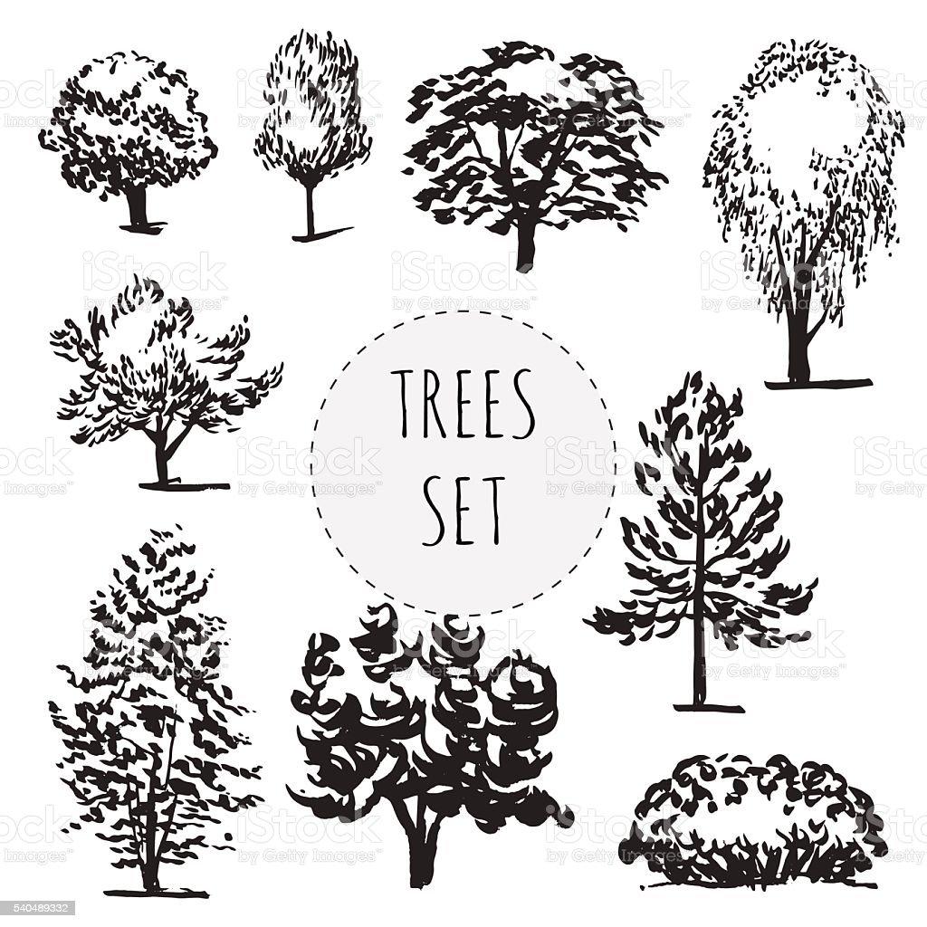 Set of different types hand drawn trees stock vector art - Architektur zeichnen ...