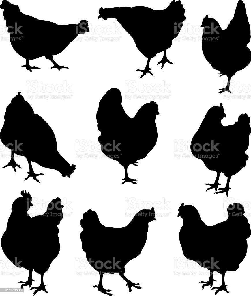 Set of different types of silhouettes of a chicken vector art illustration