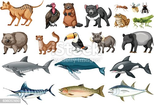 Set Of Different Types Of Wild Animals Stock Vector Art