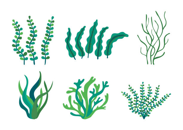 Set of different underwater sea plants and green algae for food. Edible seaweed and leaves. Plants of the aquarium. Vector illustration Set of different underwater sea plants and green algae for food. Edible seaweed and leaves. Plants of the aquarium. Vector moss stock illustrations