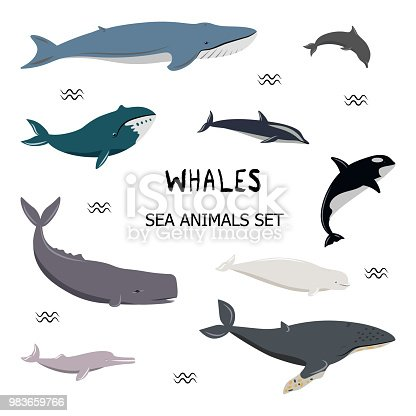 Vector illustration. Set of cartoon whales, dolphins. Blue, white-sided, beluga, bottlenose, bowhead, cachalot, humpback, killer, river dolphin. Simple icons for different designs.