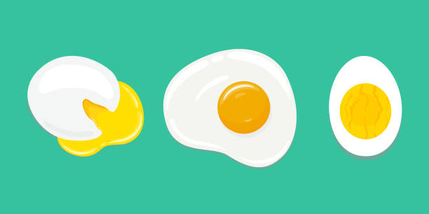 set of differently cooked eggs. poached egg, fried egg, hard boiled egg. vector hand drawn illustration. - egg stock illustrations