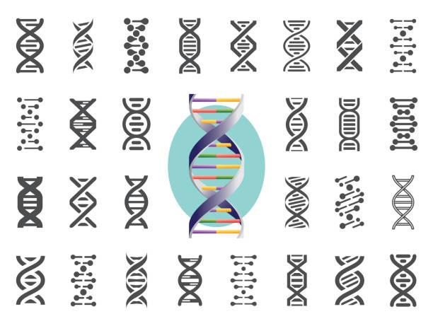 ilustraciones, imágenes clip art, dibujos animados e iconos de stock de conjunto de iconos de adn. variación genética humana. ilustración de vector. - adn