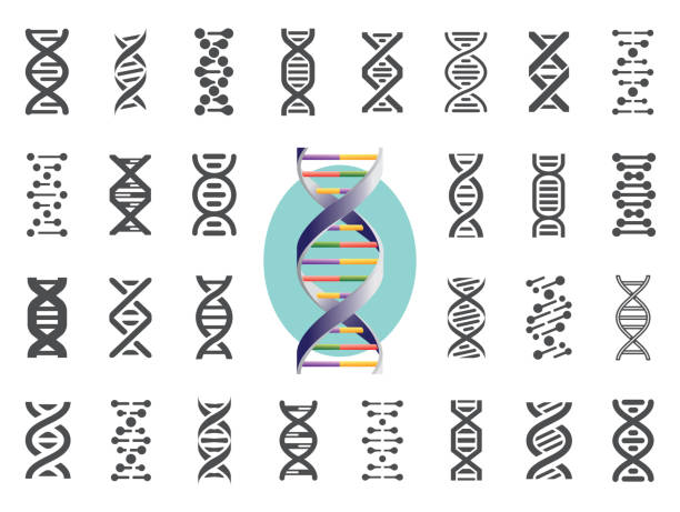 Set of DNA icons. Human genetic variation. Vector illustration. Set of DNA icons. Human genetic variation. Nucleic acid sequences. Vector illustration. dna stock illustrations