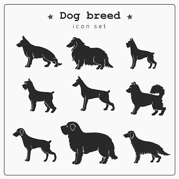 ein satz von hund rasse symbole - collie stock-grafiken, -clipart, -cartoons und -symbole