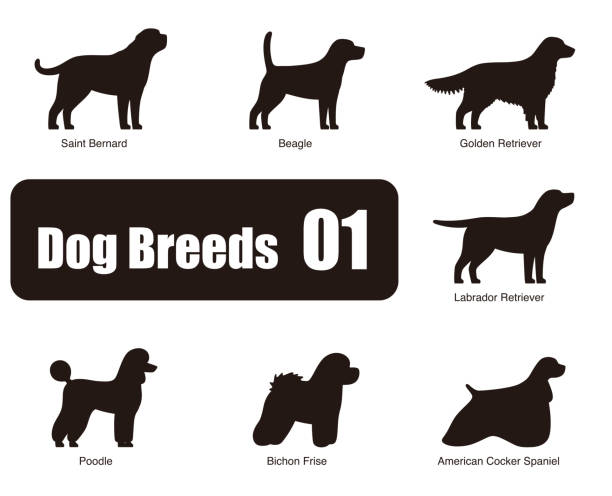 Best Labrador Retriever Illustrations, Royalty-Free Vector Graphics