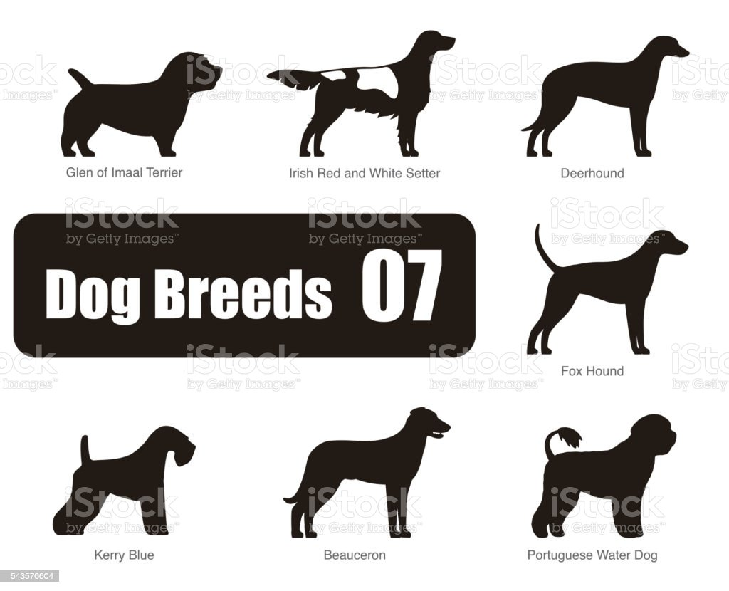 set of dog breeds, black and white, side view, vector vector art illustration