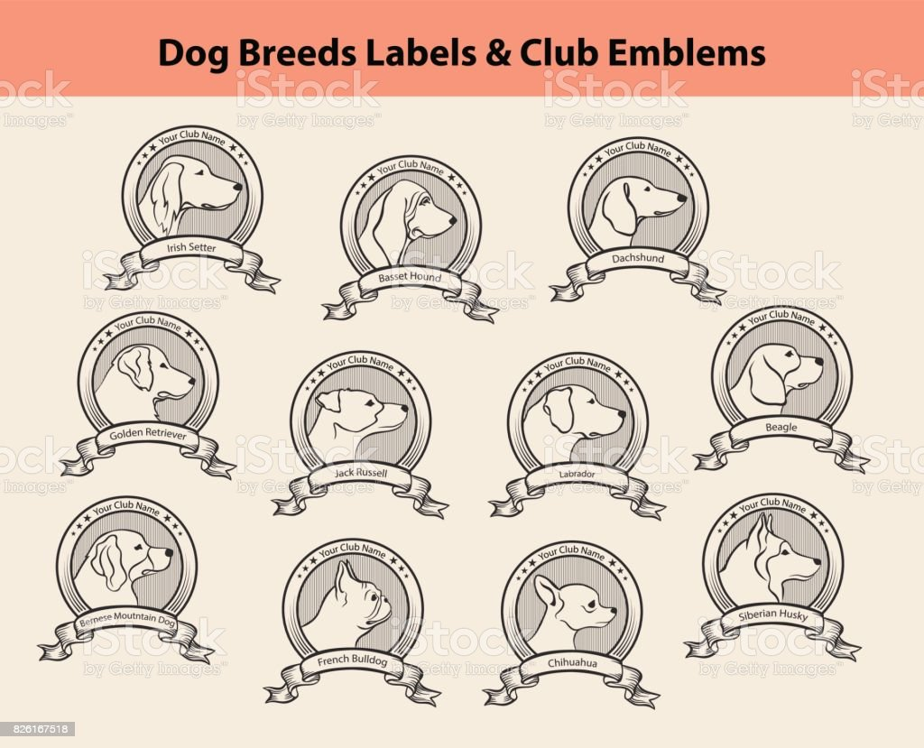 Set of Dog Breeds Labels, Dog Clubs Emblems. Profile Silhouette Dog Faces Badges vector art illustration