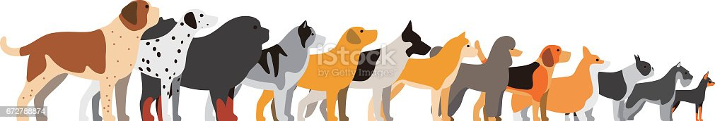 set of dog breeds, side view, vector illustration
