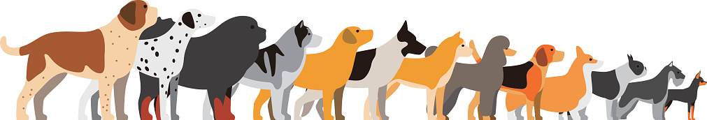 set of dog breeds, side view, vector illustration