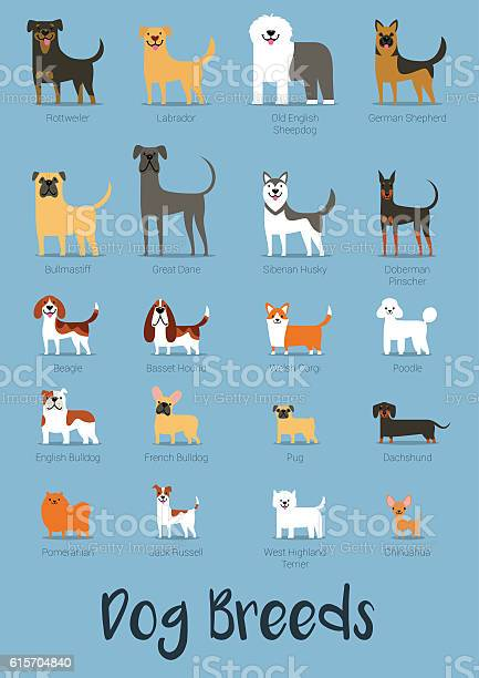 Set of dog breeds vector illustration vector id615704840?b=1&k=6&m=615704840&s=612x612&h=do00uufelu8tfx0ceo5b97pcp496zeaoswsgjnkzgmq=
