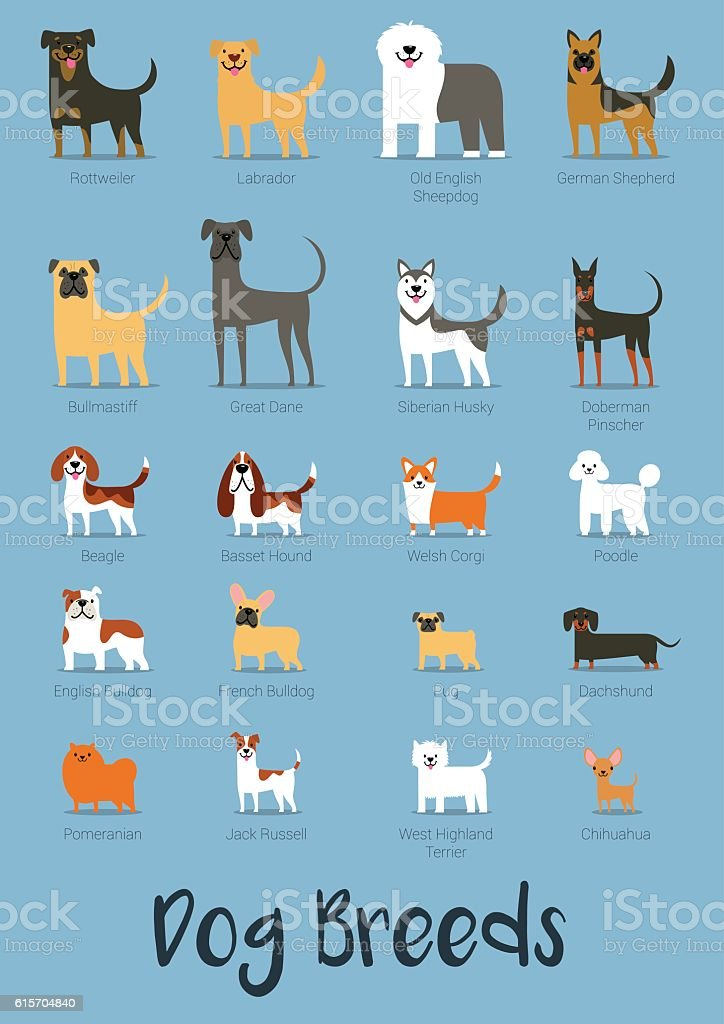 Set Of Dog Breeds Vector Illustration vector art illustration