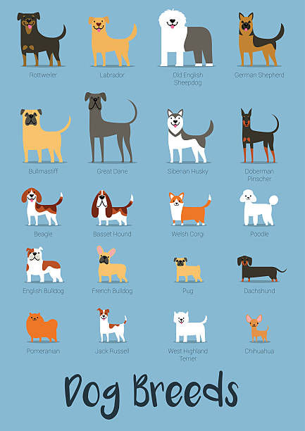Set Of Dog Breeds Vector Illustration - ilustración de arte vectorial