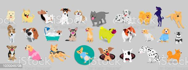Set of dogs adorable and friendly animal on gray background vector id1020045708?b=1&k=6&m=1020045708&s=612x612&h=jxhzujggmb1v4fwvpojnn jknly6dlkw0wyxs0mkujg=