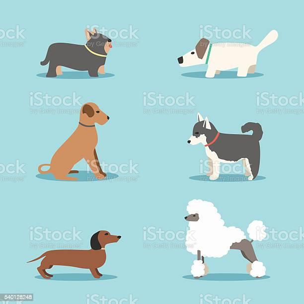Set of dogs cartoon vector illustration vet clinic vector id540128248?b=1&k=6&m=540128248&s=612x612&h=krtaefrod9fucdtiwgpzrpgpexnxa 81gt9towc48gk=