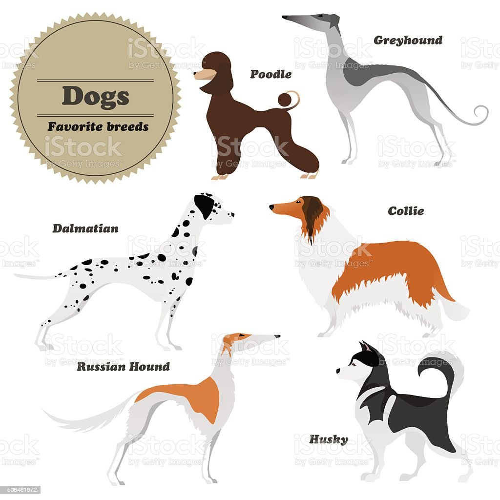 Set of dogs Greyhound, Russian hound, Husky, Poodle, Dalmatian, Collie. vector art illustration